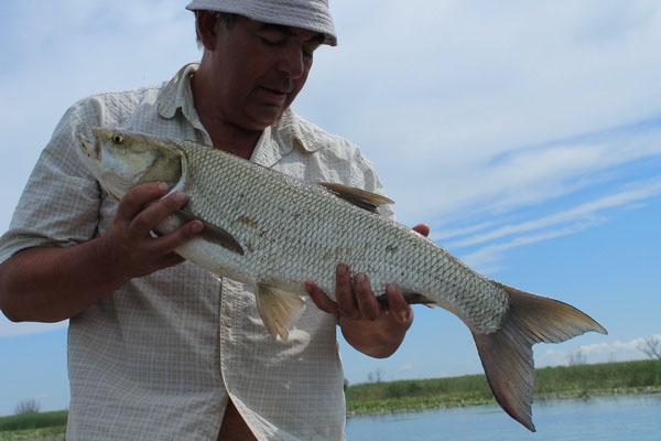 рыбалка на реке бузан волга