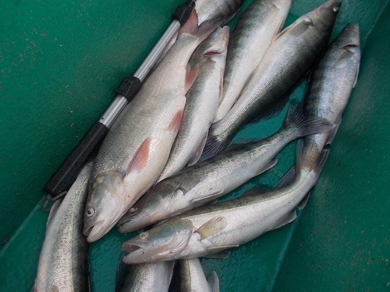 бюджетные рыболовные базы в дельте волги