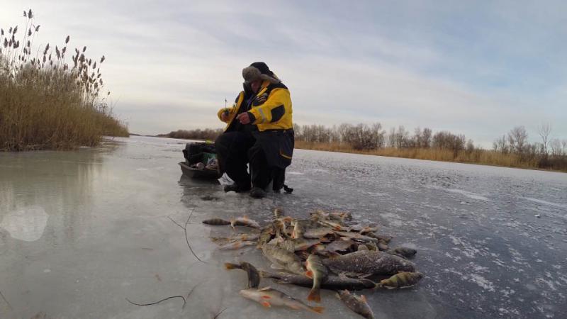 Рыбалка шерна ельцы