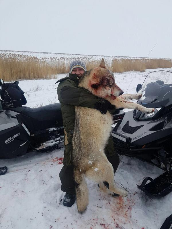 http://www.rusfishing.ru/forum/attachments/volk2-jpg.3973943/