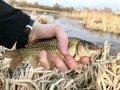 Под подольском форум рыбалка